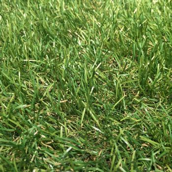Pasto Sintético en Rollo Grass Celery 10x1 m